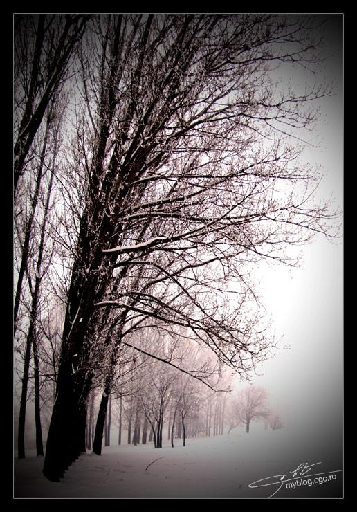 iarna-2