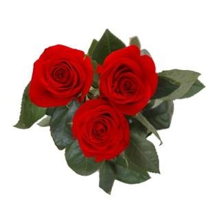 10_3-trandafiri
