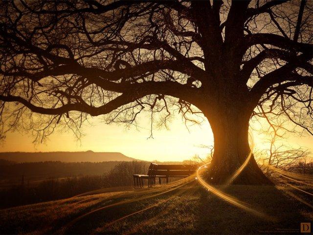 amazing tree-249191
