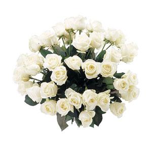 Buchet-de-Trandafiri-Albi-poza-t-P-n-Buchet-Trandafiri-albi-mare