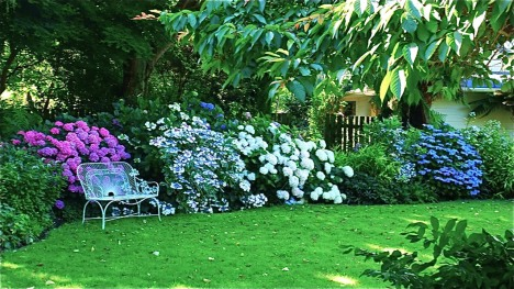 Hortensia_House_Blenheim_New_Zealand_Garden_Tour_Huguette_Michel_04